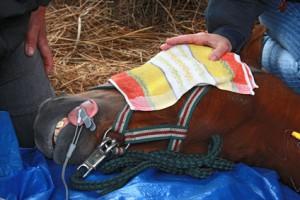 Tieroperationskostenversicherung für Pferde