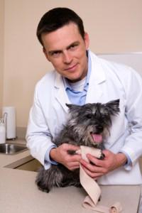 Hunde Operationskostenversicherung